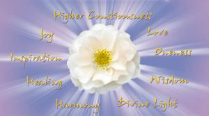 Rose Artwork - cosmic heart of sound